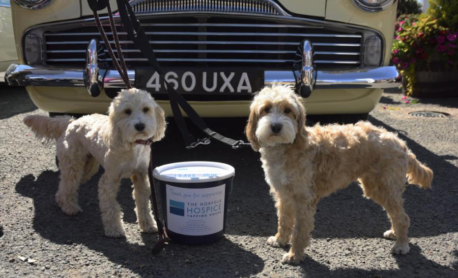2 dogs with a Collection Bucket