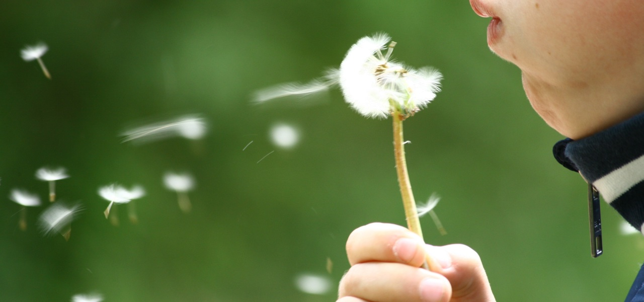 someone blowing a dandelion