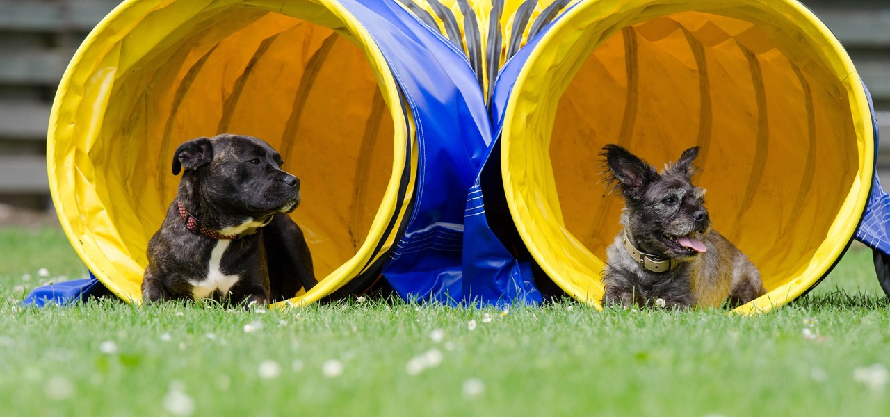 two dogs in tunnel